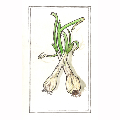 a painting of several spring onions twined together